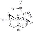 Neoverrucosano - Numeración.png