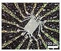 Neuromorphic Nanowire Network.jpg
