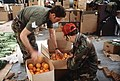New Zealand and US military personnel pack oranges into cartons. The oranges will be airdropped at McMurdo Station, Antarctica, during Operation DEEP FREEZE. Behind the men are peri - DPLA - 6197526d6dd455a6a868d0d32308176f.jpeg