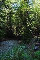 Newhalem, WA - Trail of the Cedars 14.jpg