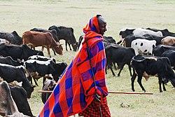 Ngorongoro 2012 05 30 2354 (7500935454).jpg