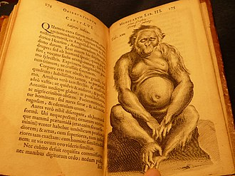 Nicolaes Tulp - Tulp's illustrated book, showing a page with an orang utan that is considered the earliest western drawing of that animal