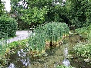 Nine Mile River, Wiltshire - Nine Mile River in Bulford