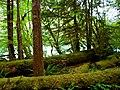 North Cascades National Park (9290008131).jpg