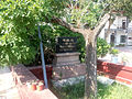 Northpark mao memorial jinan tree.jpg