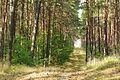 Notecka Forest, Bablin, Nowoloskoniec (9).JPG