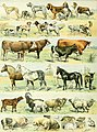 Nouveau Larousse illustré - dictionnaire universel encyclopédique (1898) (14595723647).jpg