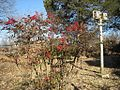 Oaklawn Garden 2011-01-29 Poplar Pike Germantown TN 70.jpg