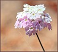 October Blooming (231469003).jpeg