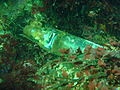 Old bottle on wreck of Umhlali PA171906.JPG