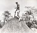 On mud volcano. Trinidad.jpg