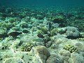 On top of the reef - panoramio.jpg