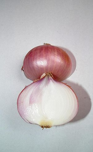 Onions have particularly large cells that are ...