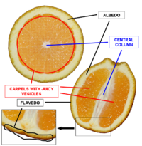 Orange cross section description.png