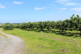 County Armagh - An orchard near Drummannon