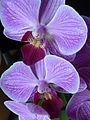 Orchideen-Blüte.JPG