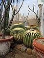 Orto Botanico Lucca piante grasse I.jpg
