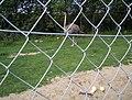 Ostrich behind wire fence.jpg