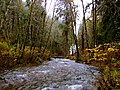 Oswald West State Park (8238576004).jpg