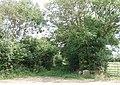 Overgrown footpath - geograph.org.uk - 521690.jpg