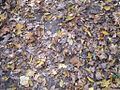 Overton Park Old Forest Trail Memphis TN 2.jpg