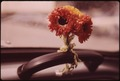 "PAPER POSY BRIGHTENS INSIDE OF PHOTOGRAPHER'S VW ""BEETLE"" - NARA - 554362.tif"