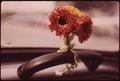 "PAPER POSY BRIGHTENS INSIDE OF PHOTOGRAPHER'S VW ""BEETLE"" - NARA - 554362.tif"