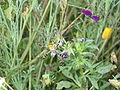 Pajak ogrodowy 2.jpg