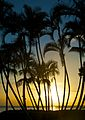 Palm Trees at Sunset (4596879275).jpg