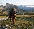 Parco Naturale Tre Cime horses 1.jpg
