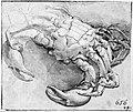 Parmigianino - A Crab for S. Maria della Steccata, Parma, NMH 7971863.jpg