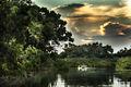 Parque nacional do Jaú - Amazônia - Brasil.jpg