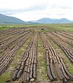 Peat cutting near Loch an Imligh - geograph.org.uk - 199807.jpg