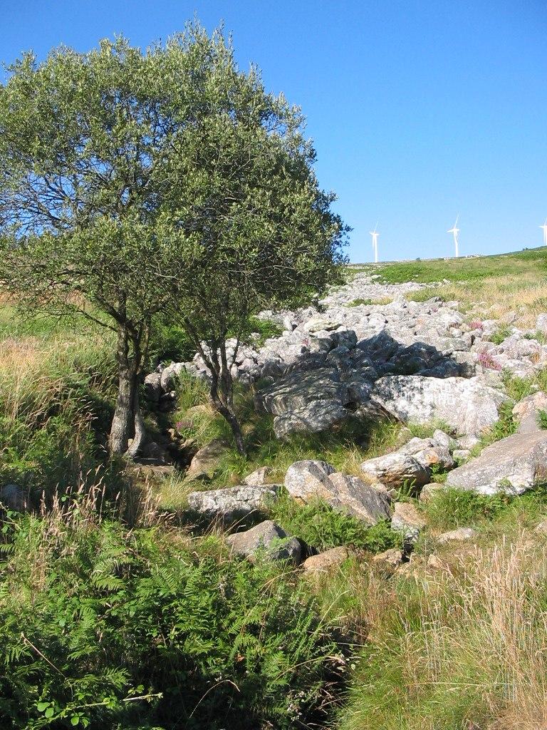 Pedregal de Irimia - nacimiento del río Miño
