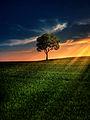 Pemë.jpg