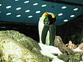 Penguins Loro Parque 04.JPG