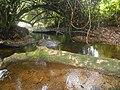 Petite rivière de Forêt.jpg