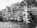 PhC42.Bx16.Great Lake.F11-10 (7163967989).jpg