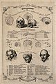 Phrenological diagrams of the skull and brain, with three po Wellcome V0009487.jpg