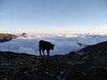 Pico Bolìvar, Venezuela (12679133235).jpg
