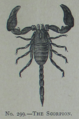 Picture Natural History - No 299 - The Scorpion.png