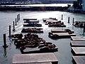 Pier 39, San Francisco Sea Lions 229037992 o.jpg