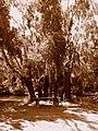 Pihenő Sástón - panoramio.jpg
