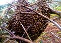 PikiWiki Israel 28810 Beehive.jpg