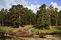 Pine Forest by Ivan Shishkin 1895.jpg