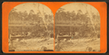 Pine forest. Florida, from Robert N. Dennis collection of stereoscopic views.png