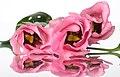 Pink flower (8209918653).jpg