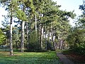 Pinner Memorial Park - geograph.org.uk - 83933.jpg