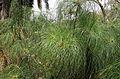 Plantes aux feuilles fines.jpg