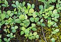 Plants on swamp 2.jpg